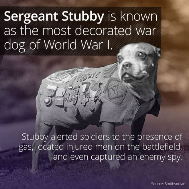 SergeantStubby_1918